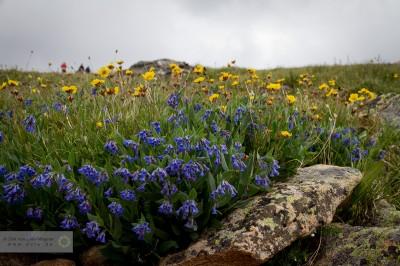 Blumen Tundra