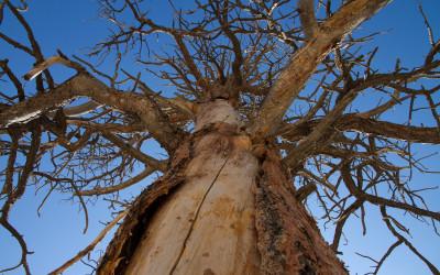Baum - 2011-08