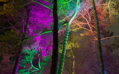 Bäume Winterlichter-Palmengarten