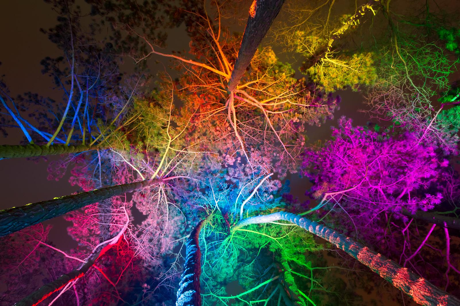 Bäume, Winterlichter-Palmengarten